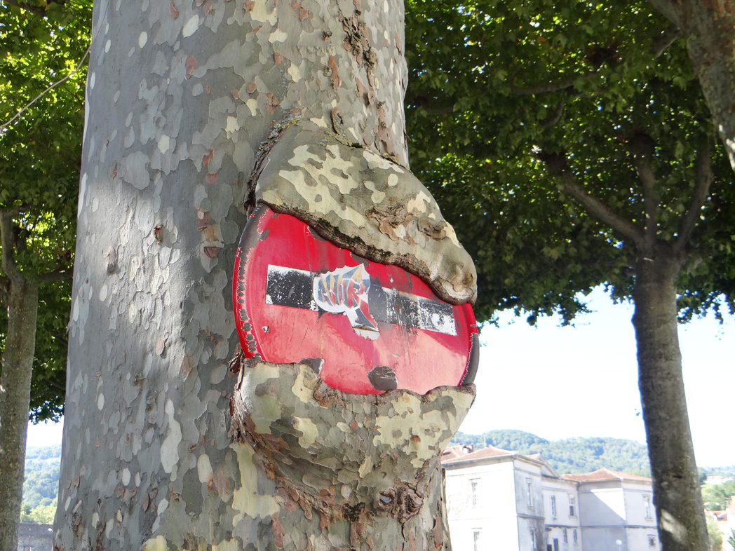 sens interdit mangé par un arbre